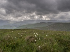 Cotton grass on the broad back of Red Screes looking wesr