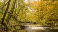 Autumn at Hardcastle Crags, upstream from Gibson Mill