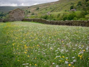 Swaledale Meadows