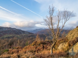 Langdale Pikes from Holme Fell